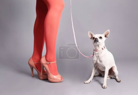 Dog near female legs