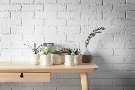 Succulents on wooden table
