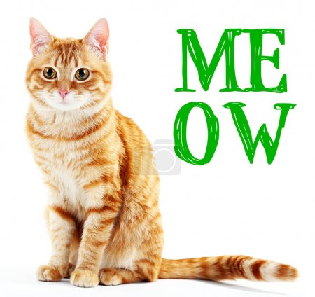 Cute cat and word MEOW