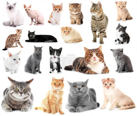 Collage of cute cats
