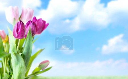 Photo pour Belles fleurs colorées sur fond de ciel nuageux - image libre de droit