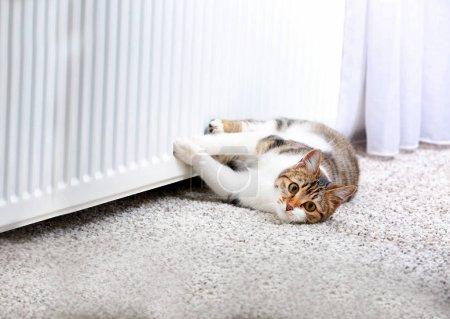 Cute cat lying