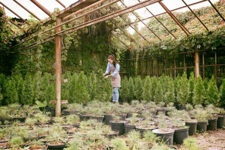 gardener looking after young coniferous plants