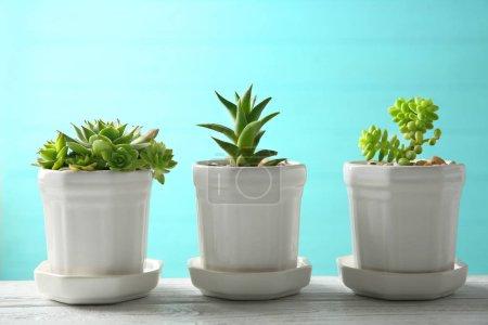 Photo pour Pots avec succulents sur table sur fond bleu - image libre de droit