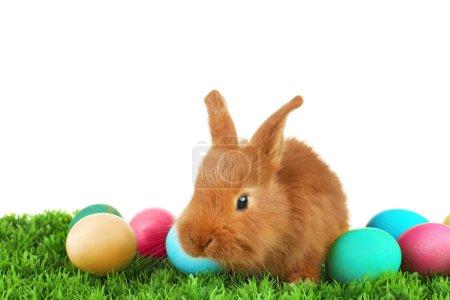 Photo pour Mignon lapin drôle et coloré d'oeufs sur l'herbe verte sur fond blanc - image libre de droit