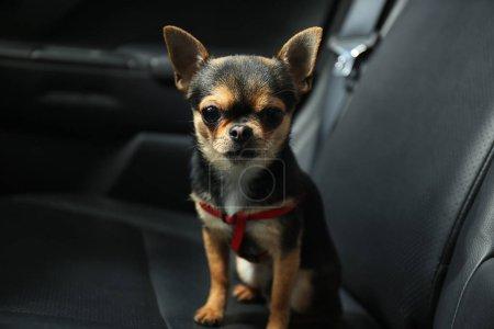Dog sitting in a car seat