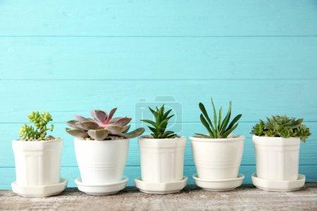 Photo pour Pots avec de beaux succulents sur fond bleu - image libre de droit
