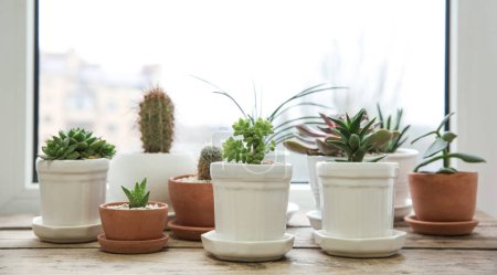 Pots with beautiful succulents