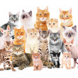 Group of cute cats on white background...