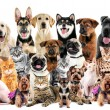 Group of cute pets on white background...
