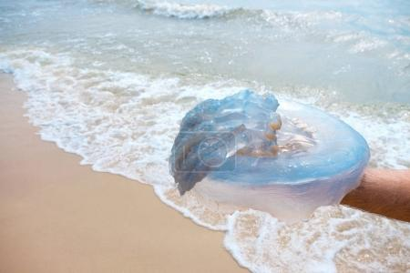 Large jellyfish in the man's hand.