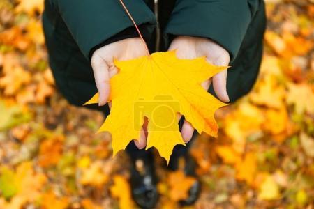 Female hands holding leaf