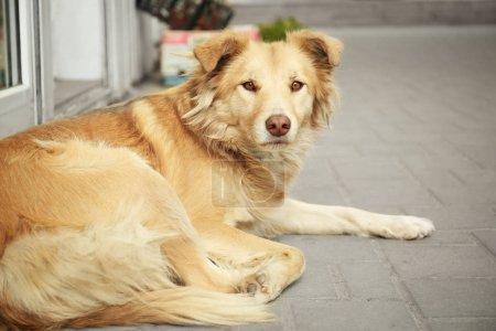 Cute homeless dog