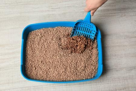 Female hand cleaning cat litter box on wooden background
