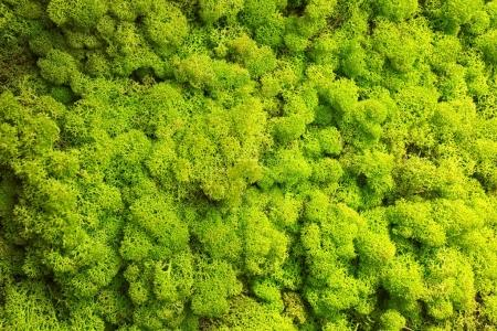 Photo pour Mousse verte lumineuse comme fond - image libre de droit