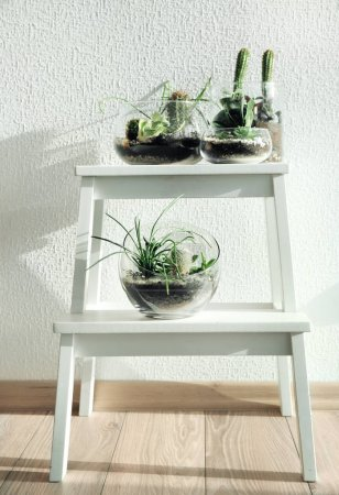 Photo for Succulent gardens in glass vases on step ladder - Royalty Free Image