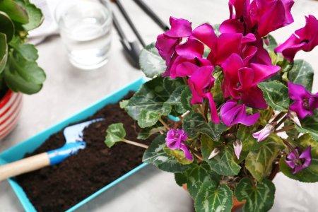 Beautiful flowers and gardener equipment