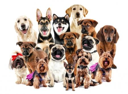 Group of cute dogs on white background...