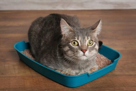 Cute cat in plastic litter box