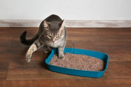 Cute cat in plastic litter box