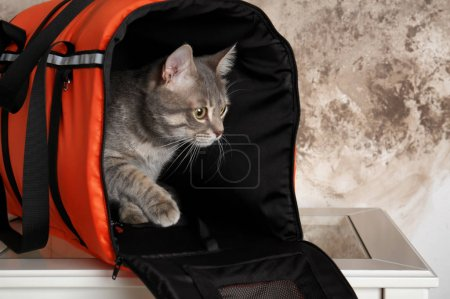 Cat in carrier bag