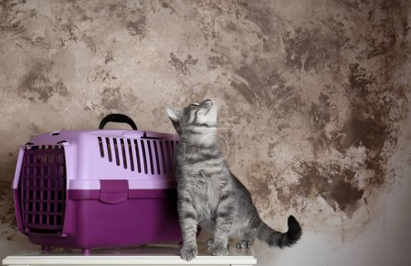 Cat and carrier box