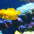 Exotic coral fish in aquarium...