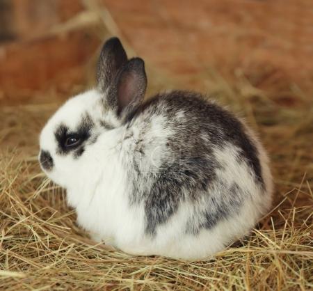 Cute funny rabbit