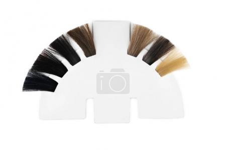 Palette of hair colors samples