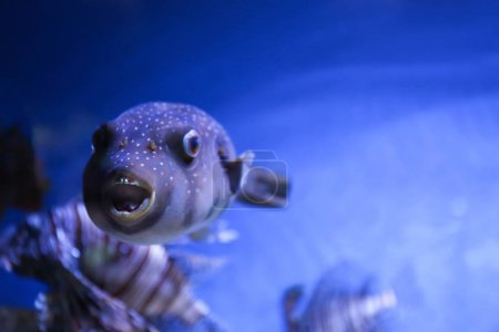 Exotic sea fish