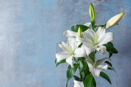 Beautiful white lilies