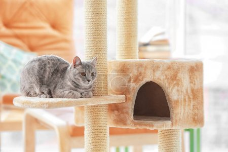 Photo for Cute funny cat and tree in room - Royalty Free Image