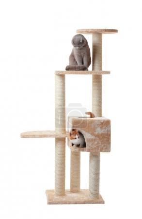 Photo for Cute funny cats and cat tree on white background - Royalty Free Image