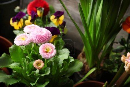 Beautiful flowers in pots