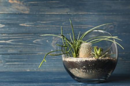 Photo for Glass bowl with succulents on colour wooden background - Royalty Free Image