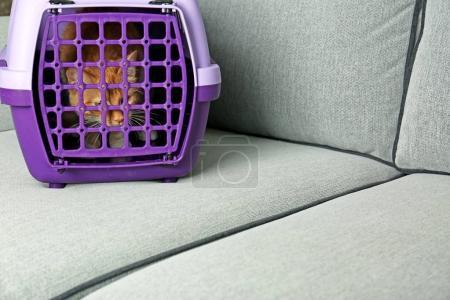 Foxy cat inside carrier box