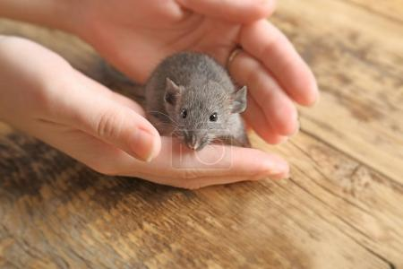 Female hands with cute funny rat