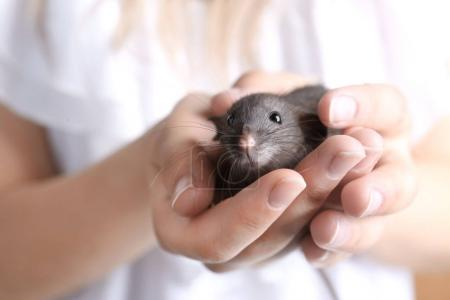 Young woman with cute rat