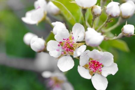 Branch of blooming tree flowers