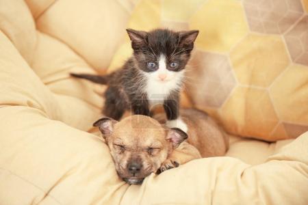 Cute little kitten and puppy