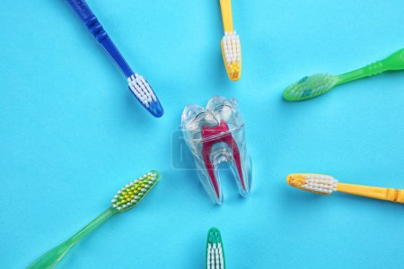 Toothbrushes and plastic tooth mockup