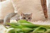 Cute cat lying on white rug