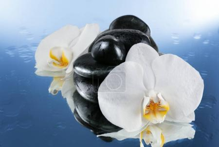 Beautiful white orchids with stones