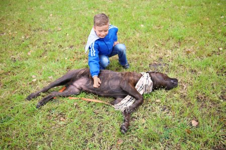 Cute little boy with his dog outdoors