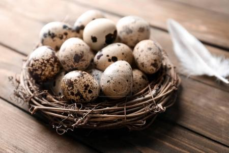 Quail eggs in bird nest and feather on wooden table
