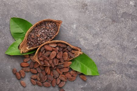 Halves of cocoa pod with beans and nibs on grey background