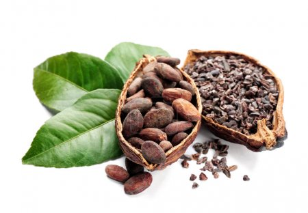 Halves of ripe cocoa pod with beans and nibs on wh...