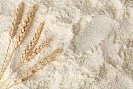 Wheat spikelets on white flour