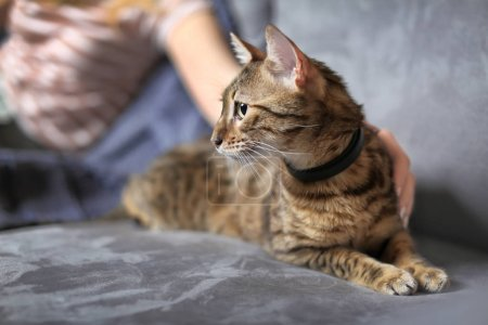 Woman stroking her cute cat at home, closeup