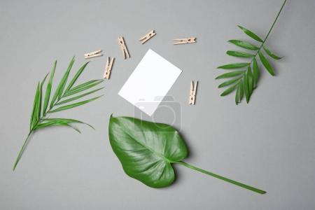 Tropical leaves on grey background, flat lay
